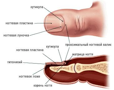 Микоз ногтей: патология и лечение